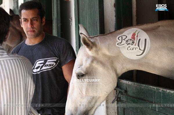 Salman Khan (41648)