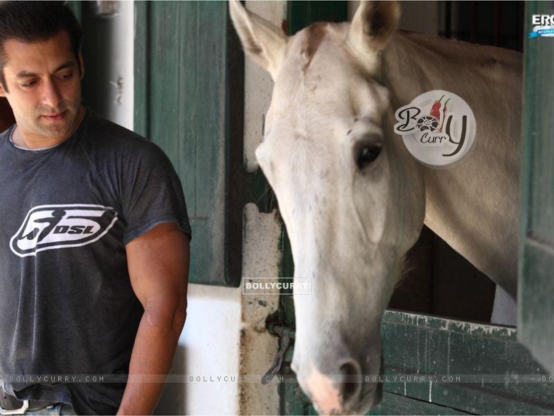 Salman Khan (41650) size:800x600